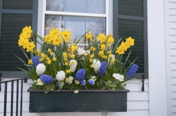 Window  Boxes: Bright Foliage